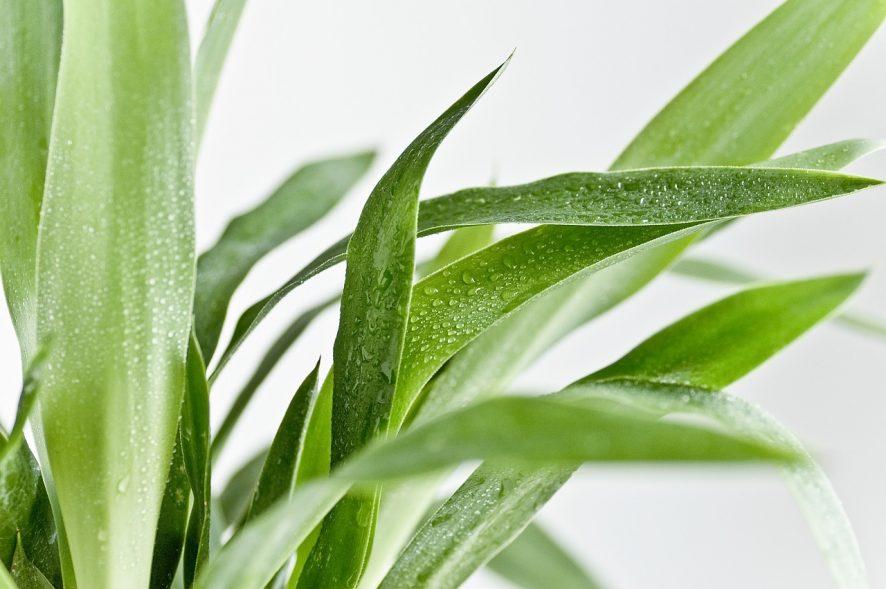Funciones del higrostato sabes qu es y para qu sirve - Humidificar el ambiente ...