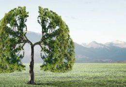 Aire saludable, ¿sirve de algo cuidarse si descuidamos lo que respiramos?