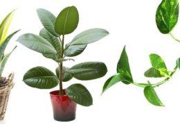 Plantas recomendadas para filtrar el aire