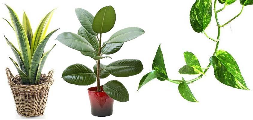 Plantas para mejorar la ventilación